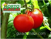 Con la guía tomatera obtendrá hortalizas de la mejor calidad
